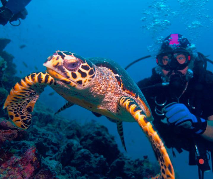 plongee-sous-marine - Photo