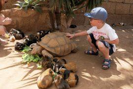 Grosse tortue
