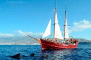Dauphins a cote du Peterpan
