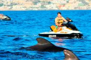 Dolphins and Jet-ski