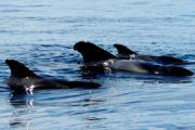 Des baleines a Tenerife