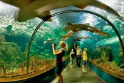 Loro parque tunnel aquarium