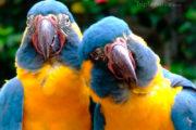 drole de perroquets
